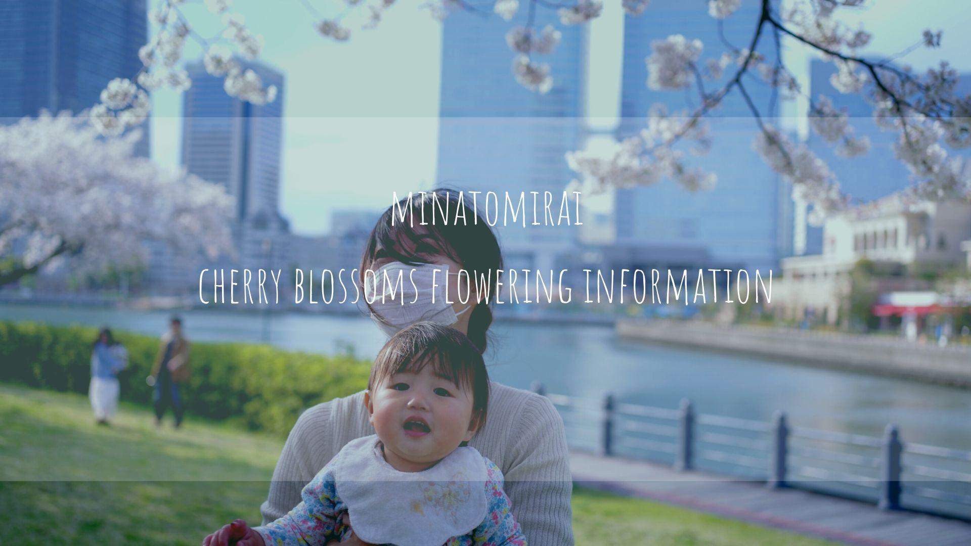 【2020年】みなとみらい桜開花情報