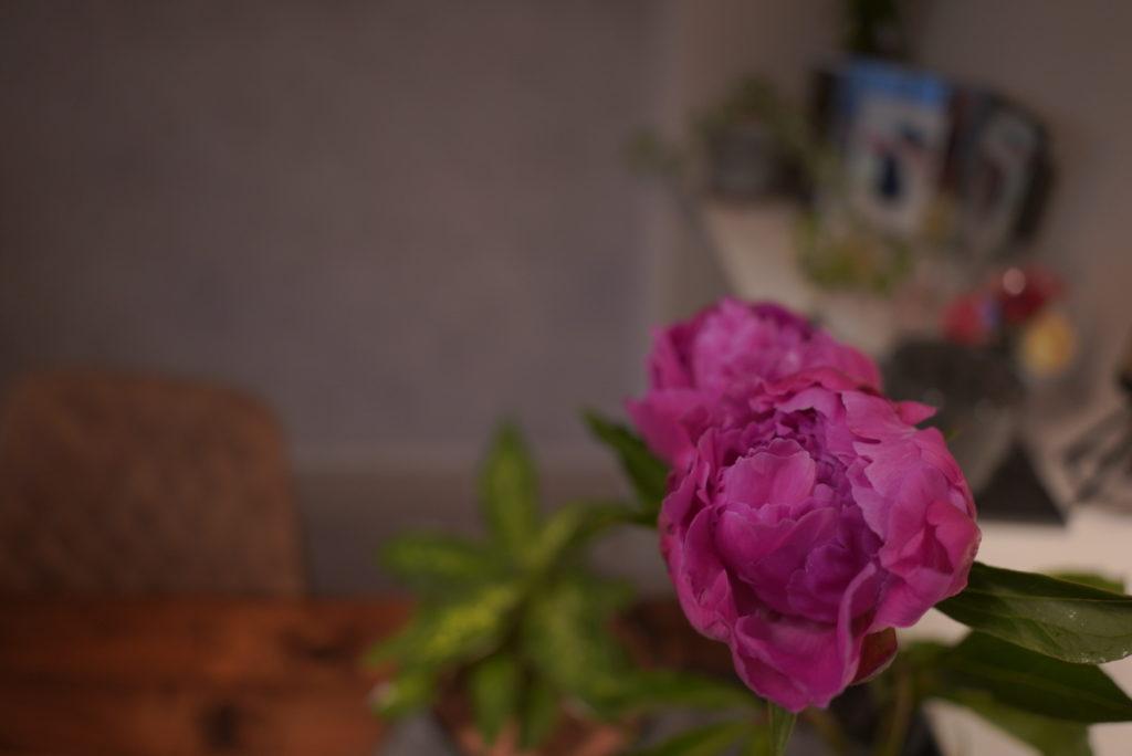 タムロン20mm 花