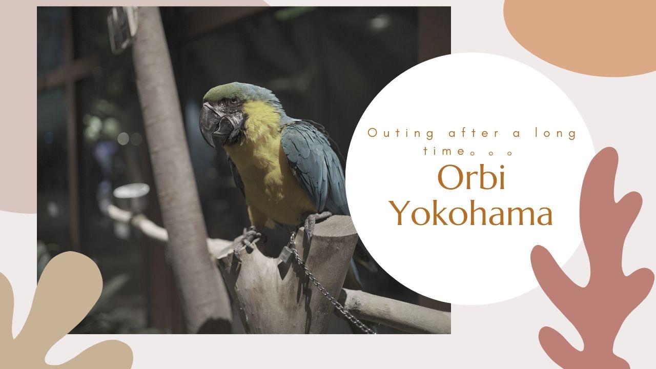 週末のお出かけ♪<br>Orbi Yokohama(オービィヨコハマ)で非日常を体験!!